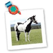 Horse - Paint Horse - Quilt Squares