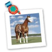 Horse - Champion Paint Quarter Horse - Quilt Squares