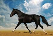 Arabian Horse in Desert Canvas Wall Art Print, 5 Stars Gift, Startonight 60cm X 90cm