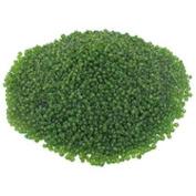Green Glass Seed Beads Beading Sz 6/0 Approx 1/2 Kilo