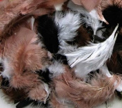 20 Pack CHENILLE KRAFT COMPANY ASSRT QUILL FEATHERS NATURAL colour
