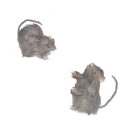Sunstar Industries Mini Rat Set of 2