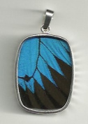 Ulysses Swallowtail Blue and Black Butterfly Oblong-Shaped L Pendant