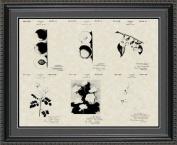 Luther Burbank Botanist Patent Art Collection 20x24 | Gardener Farmer Print Gift