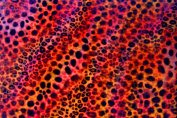 3D Lenticular Sheets --- Pattern-Changing Cheetah to Leopard Print
