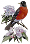 Connecticut State Bird and Flower American Robin and Mountain Laurel Counted Cross Stitch Pattern