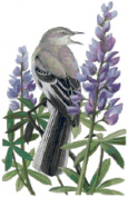 Texas State Bird and Flower Northern Mockingbird and Bluebonnet Counted Cross Stitch Pattern