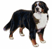 Bernese Mountain Dog Counted Cross Stitch Pattern