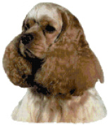 Ascob Cocker Spaniel Dog Portrait Counted Cross Stitch Pattern