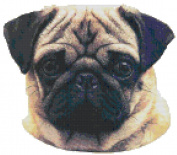 Pug Dog Portrait Counted Cross Stitch Pattern