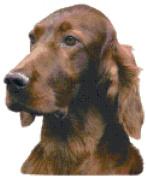 Irish Setter Dog Portrait Counted Cross Stitch Pattern