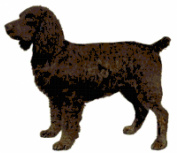 Boykin Spaniel Dog Counted Cross Stitch Pattern