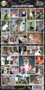 Pet Qwerks S54 Italian Greyhound Sticker