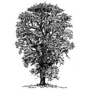 Art-Kure EZMount Cling Stamp-Elm Tree 5.1cm - 1.3cm x 10cm