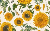 Sunflowers Decorative Gift Wrap Paper Roll of 2 Full Sheets