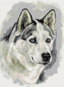 Husky Counted Cross Stitch Kit