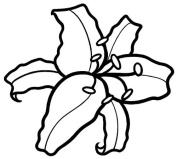 White 13cm Lily Flower Sticker Decal