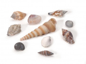 Darice 2503-63 500-Gramme Natural Small Shell Mix