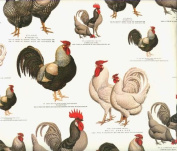 Chickens and Roosters Decorative Gift Wrap Paper