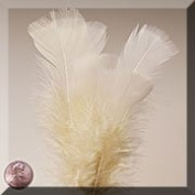 1ea - Large Beige Turkey Flat Feather