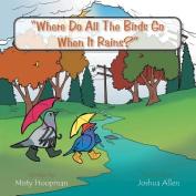 Where Do All the Birds Go When It Rains?