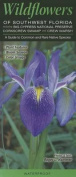 Wildflowers of Southwest Florida Including Big Cypress NP, Corkscrew Swamp & Crew Marsh  : A Guide to Common & Rare Native Species