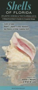 Shells of Florida-Atlantic Ocean & Florida Keys  : A Beachcomber's Guide to Coastal Areas