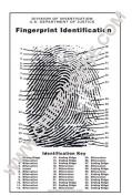 Fingerprint Chart