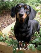 My Dachshund's Journal