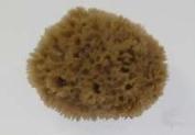 HYDRA 00509 Number-556 14cm X 15cm 156 Key Wool Natural Sponge