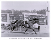 Horse Racing Legend Dr. Fager 8x10 Photo
