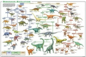 Dinosaur Evolution Educational Science Chart Poster 90cm x 60cm