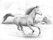 Sketching By Number Kit 30cm x 41cm -Galloping Horse