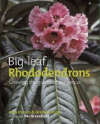 Big Leaf Rhododendrons