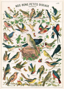 Cavallini Decorative Paper- Bird Chart 50cm x 70cm Sheet