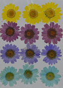 LoveDiyLife yellow brown daisy real pressed dried flowers