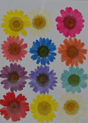 LoveDiyLife colourful yellow white red purple daisy real pressed dried flowers