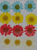 LoveDiyLife blue yellow red white daisy real pressed dried flowers