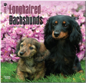 Dachshunds, Longhaired 2015 Square 12x12