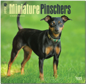 Miniature Pinschers 2015 Square 12x12