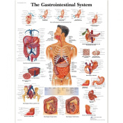 3B Scientific The Gastrointestinal System Chart Laminated Version
