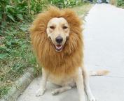 Pet Dog Costume Lion Mane Wig Christmas Halloween Clothes Festival Fancy Dress up