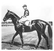 Horse Racing Triple Crown Winner War Admiral 8x10 Photo