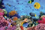 Cheetah Leisure 1000 Piece Coral Reef Jigsaw Puzzle