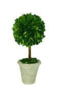 Mills Floral Company Box Topiary, Single, Large, 6 x 16