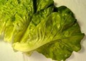Artificial Fake Faux Lettuce Leaves Bag 6
