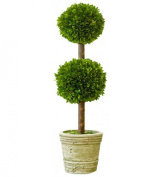 Preserved Boxwood Double Ball 80cm