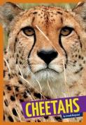 Cheetahs (Wild Cats)