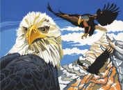 Reeves Painting by Numbers Eagles