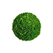 Mills Floral Company Boxwood Ball 20cm